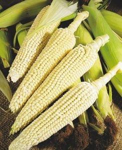 Лопающаяся кукуруза