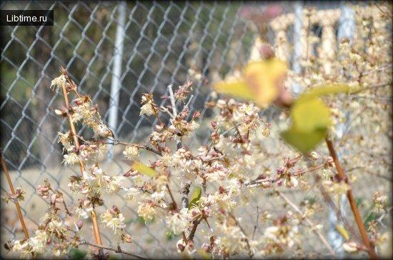 Влияние весенних заморозков абрикос
