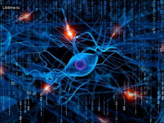 История и применение нейронных сетей. Персептрон