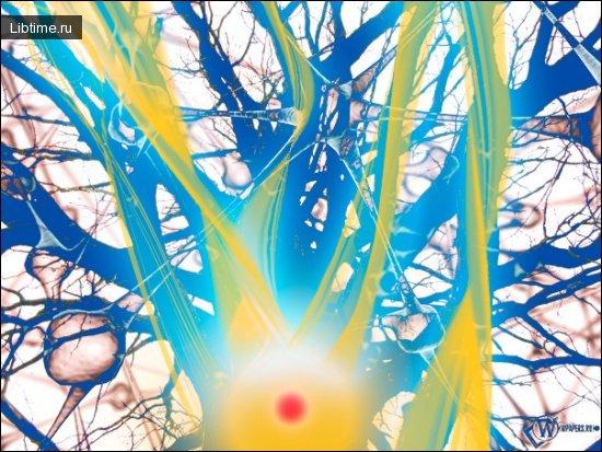 Основы нейронных сетей. Задачи нейронных сетей