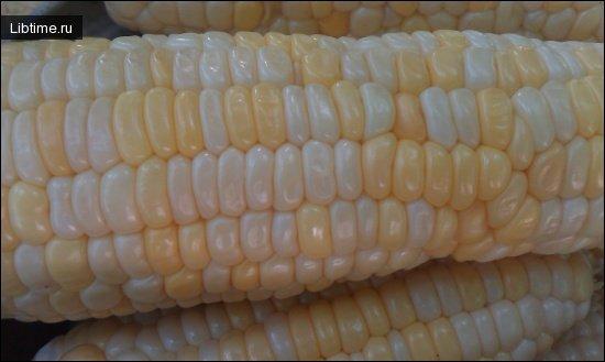 Белок кукурузы