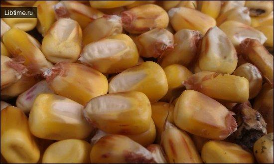 Состав зерна кукурузы