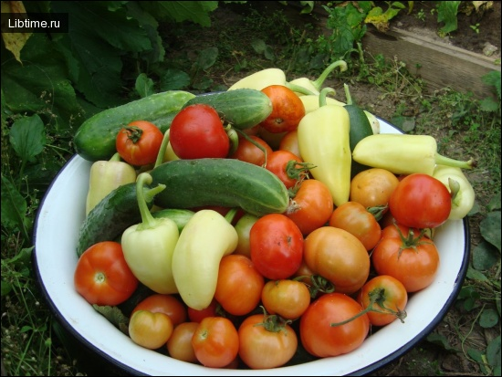 Как получить хороший урожай