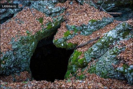 Растительность пещер