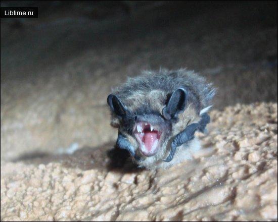 Животный мир пещер