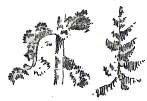 Рисование хвойной растительности штрихами