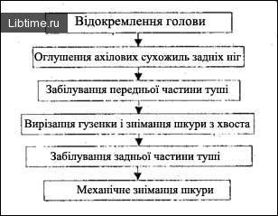 Схема послідовності операцій під час знімання шкур із туш ДРХ