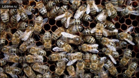 Поводження з бджолами