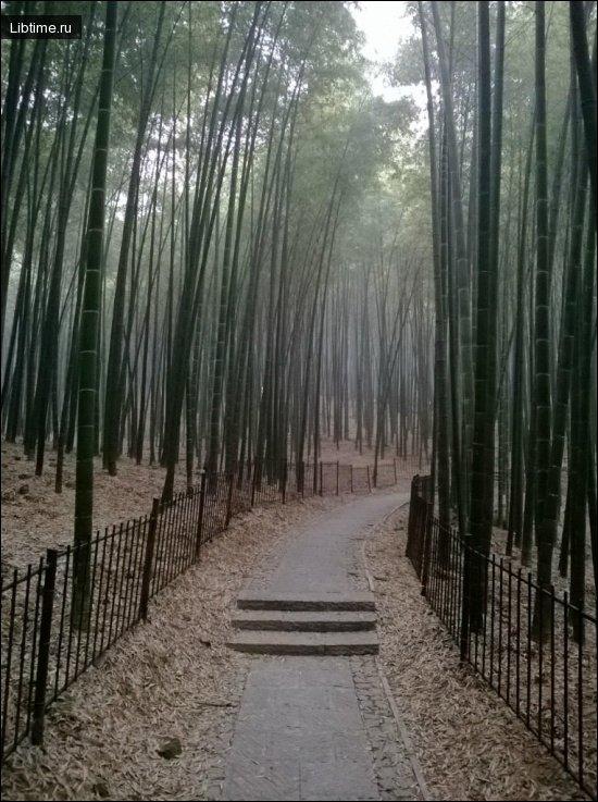 Садово-паркове мистецтво Японії