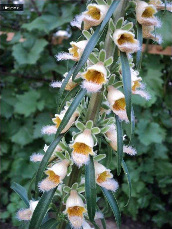 Лечебная ценность растений