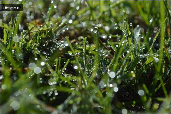 Медико-биологическая активность растений