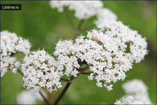 Систематическое родство лекарственных растений