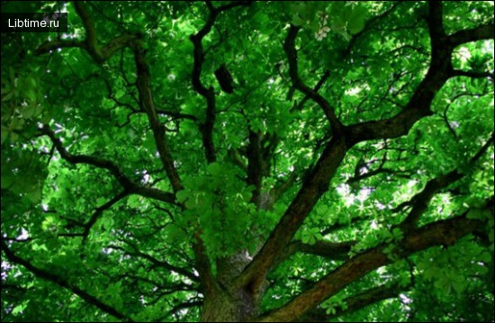 Системи озеленення в містах