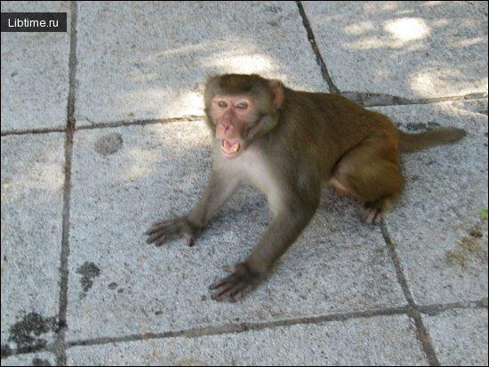 Поведение обезьяны