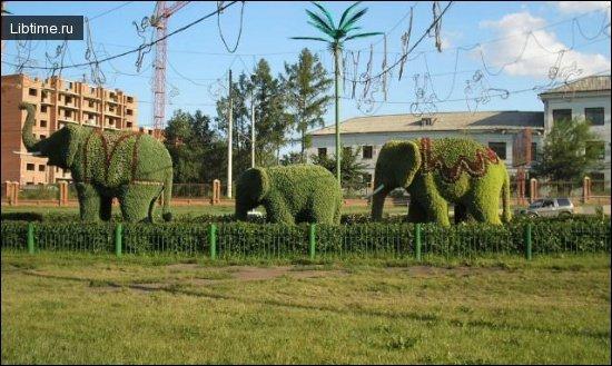 Дерево-слон