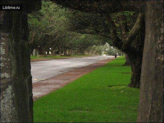 Озеленення вулиць