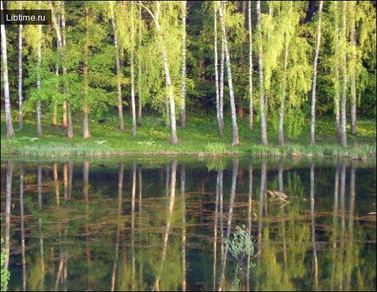 Озеро в парку