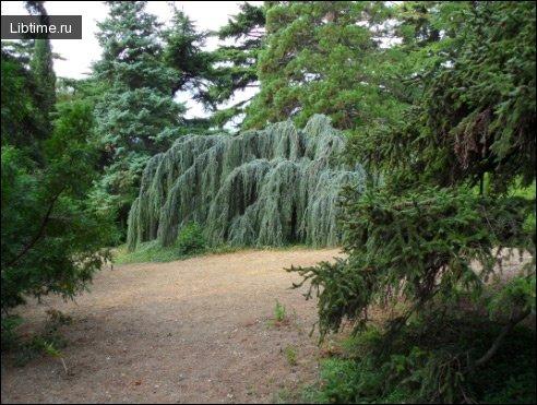 Класифікація парків