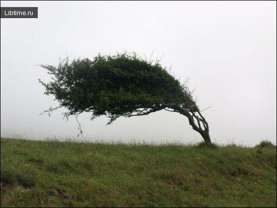 Ориентирование по ветру