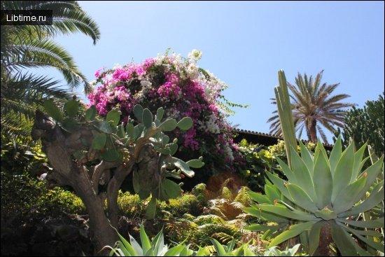Ботанічний парк