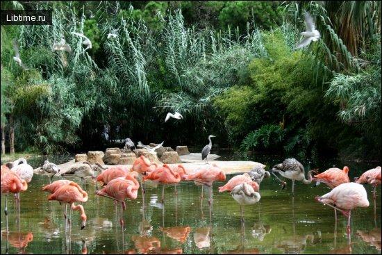 Зоологічний парк