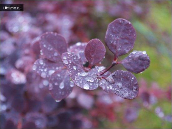 Дождевые капли