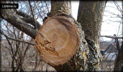 Обрезка плодовых деревьева