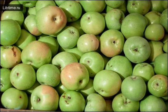 Зимние сорта яблони