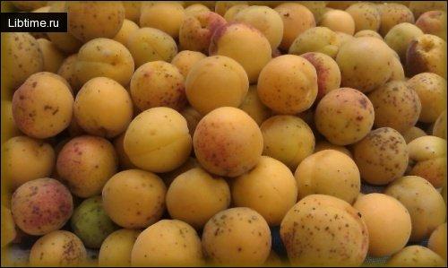 Описание сортов абрикосовс