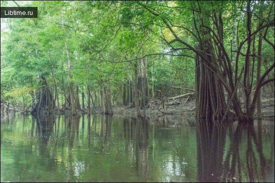 Длина реки Амазонки