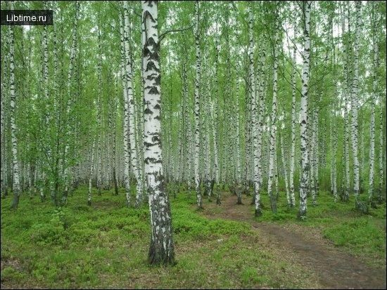 Значение леса в жизни человека
