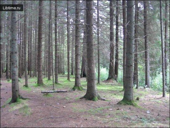Леса Днепропетровщины