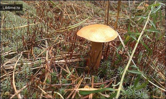 Красивый гриб