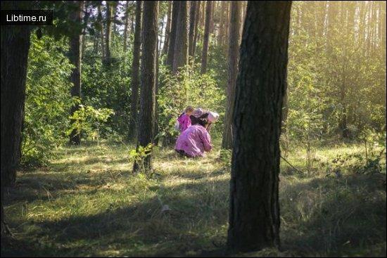 Грибники в лесу