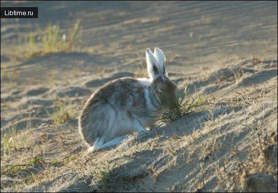Корм зайцев