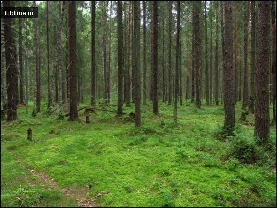 Чем полезен лес