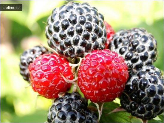 лесные плоды и ягоды