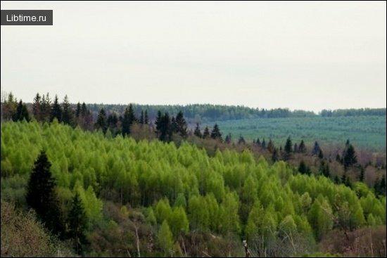 Подрост леса