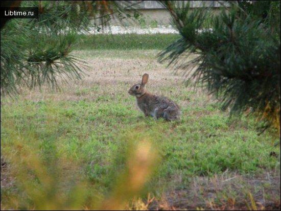 Охота на зайцев с гончей
