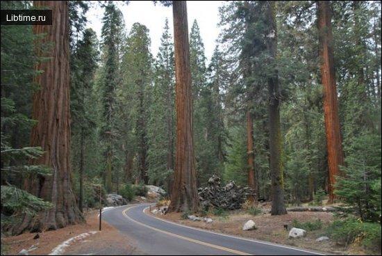 Господствующие деревья