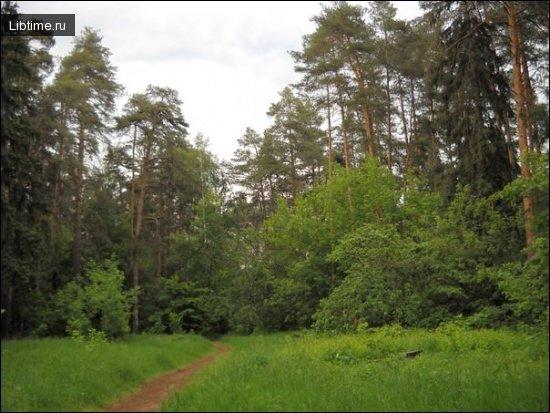 Крона деревьев в лесу