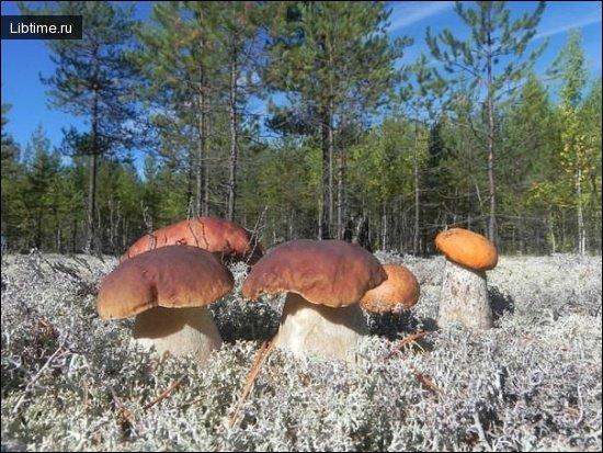 Осенние грибы фото природа home helper