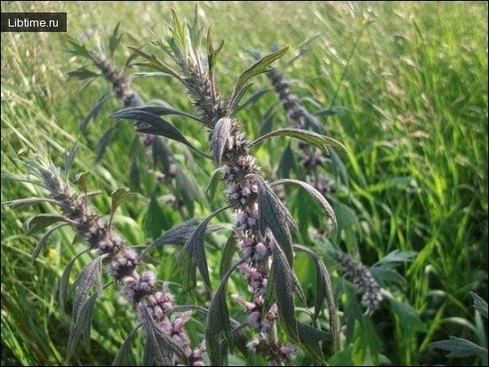 Чем ценны лекарственные растения