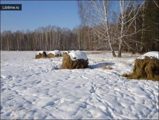 Зимняя подкормка сеном