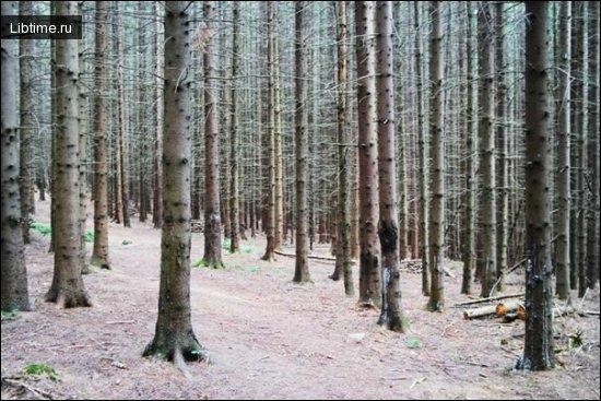 Какие типы лесов