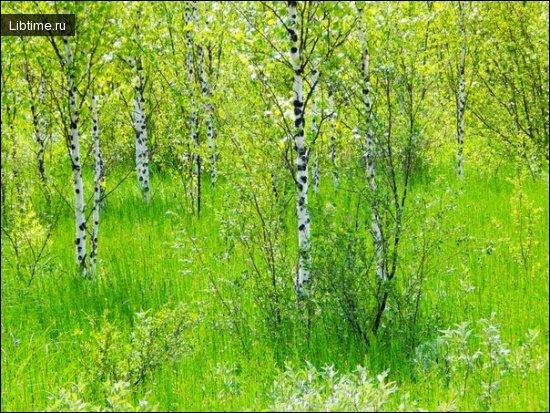 Естественное возобновление леса