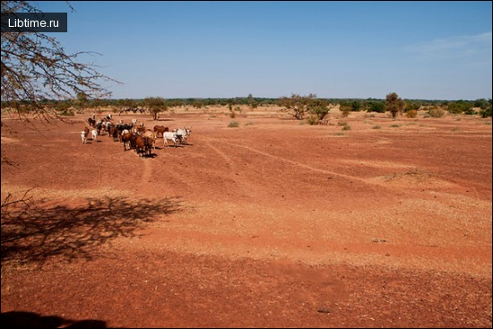 Пастух по дороге в Томбукту
