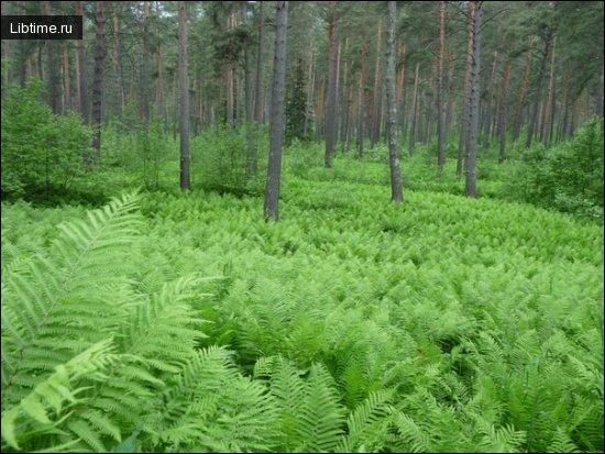 Подлесок в лесу
