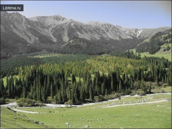 Виды лесных насаждений