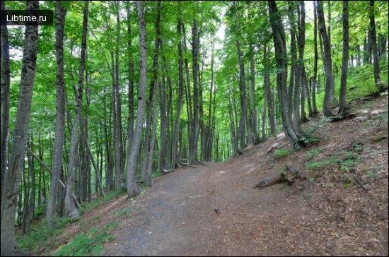Ботанические памятники природы - Буковый лес